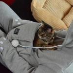 """La felpa per gatti, della serie """"non sanno più cosa inventare"""""""