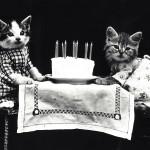 17 febbraio: giornata del gatto